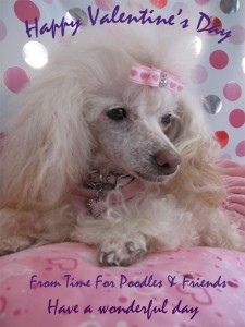 Time for Poodle knows how to look her best for Valentines Day! All dogs, cats, pets and animals welcome at the Pet Parade