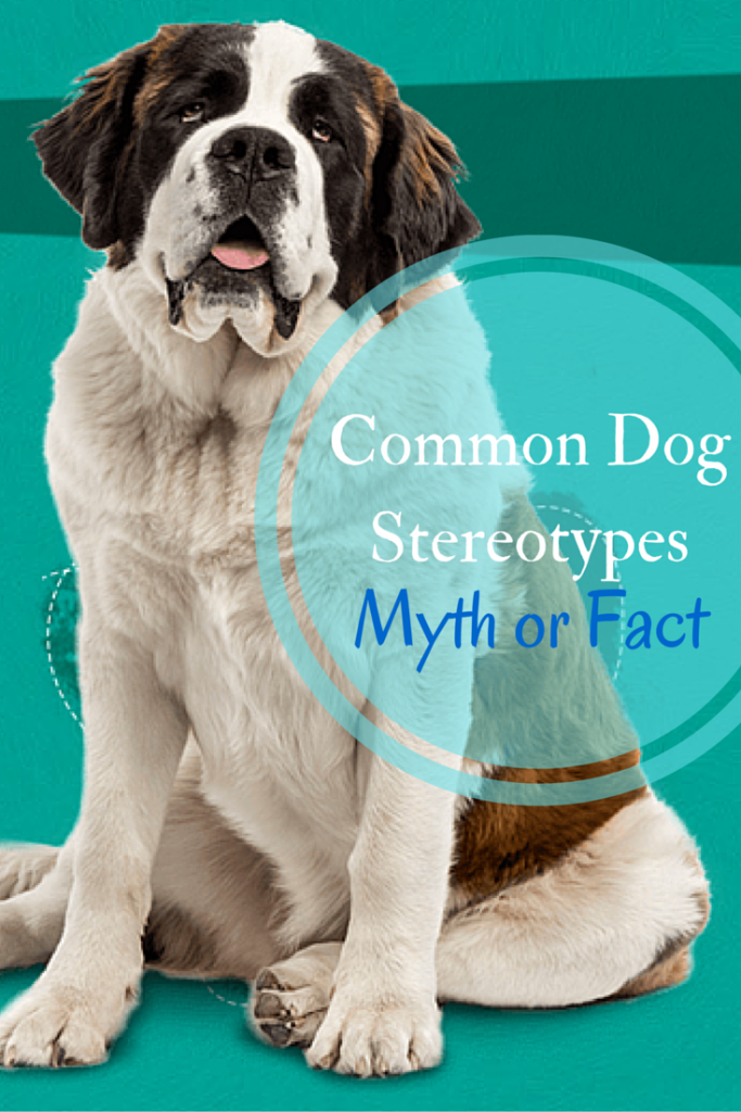 Common Dog Breed Stereotypes myth busters. Know myth from fact about these popular dog breeds