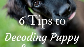 6 Tips to Understand Puppy Language