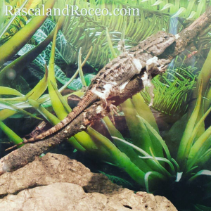 Reptiles can make great pets | blue belly lizard | lizards shedding