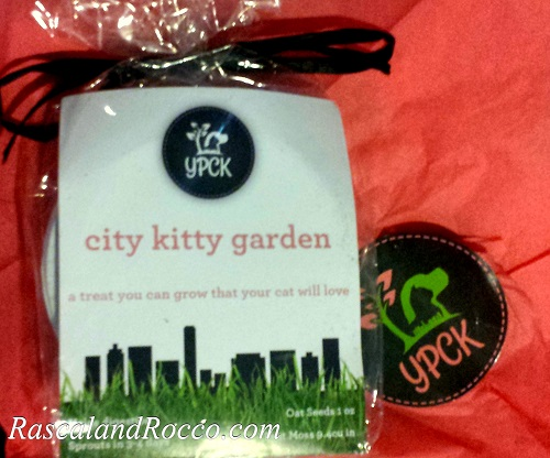 Grow your own cat grass with the gift of healthy oat kitty grass kit from @YPCKpets Yuppy Puppy City Kitty City Kitty Garden Kit | pets | cats