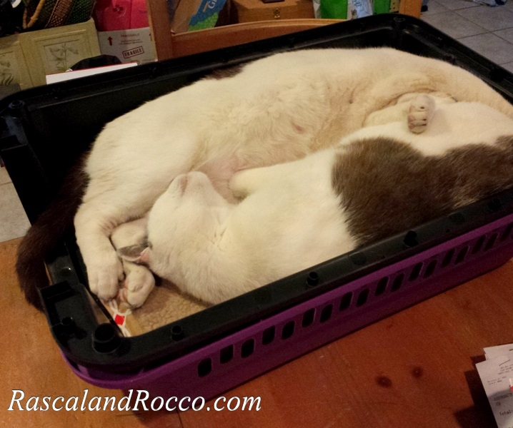 cats in a box Cuddly cute adorable cats. Cat bed Kitty travel crate