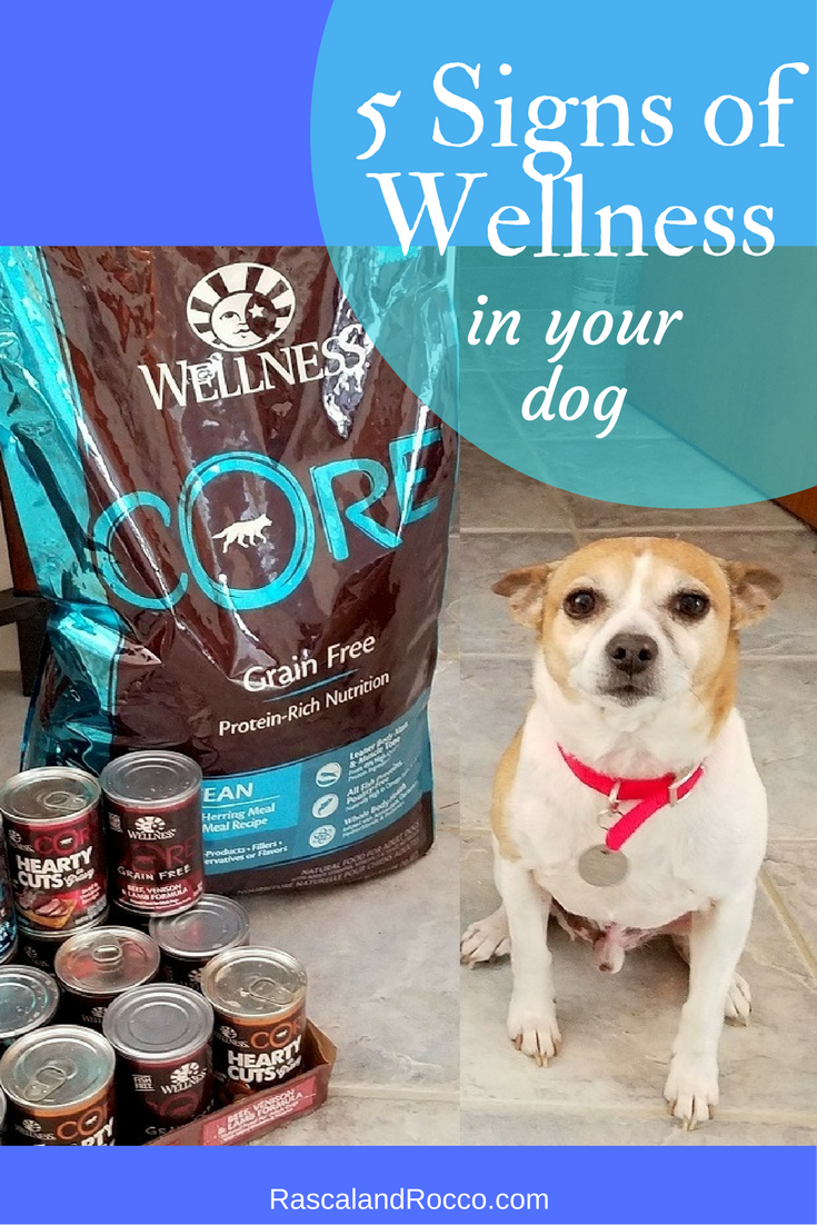5 Signs of Wellness in your dog and what to look for in a healthy dog food. High quality pet food can make all the difference in your dogs wellbeing @Petsmart #WellnessPet #sponsored @wellnesspetfood