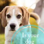 Is Your Pooch Protected? #12Bravecto