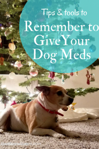Tips to remember your dogs medication #‎12bravecto‬ ‪#‎ad‬ @MerckAH More product info: https://goo.gl/aqJOrP
