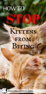 How to Stop Your Kitten from Biting | cats | cat behavior | kittens | kitten training | biting cats | stop biting cats | stop cat from biting