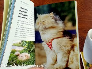 gorgeous cat photos in cat book Adventure Cats