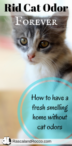 How to get rid of cat odor naturally | way to freshen your home | get rid of cat smell in house | pet odors | cats | diy
