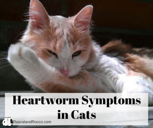 Heartworm symptoms in cats