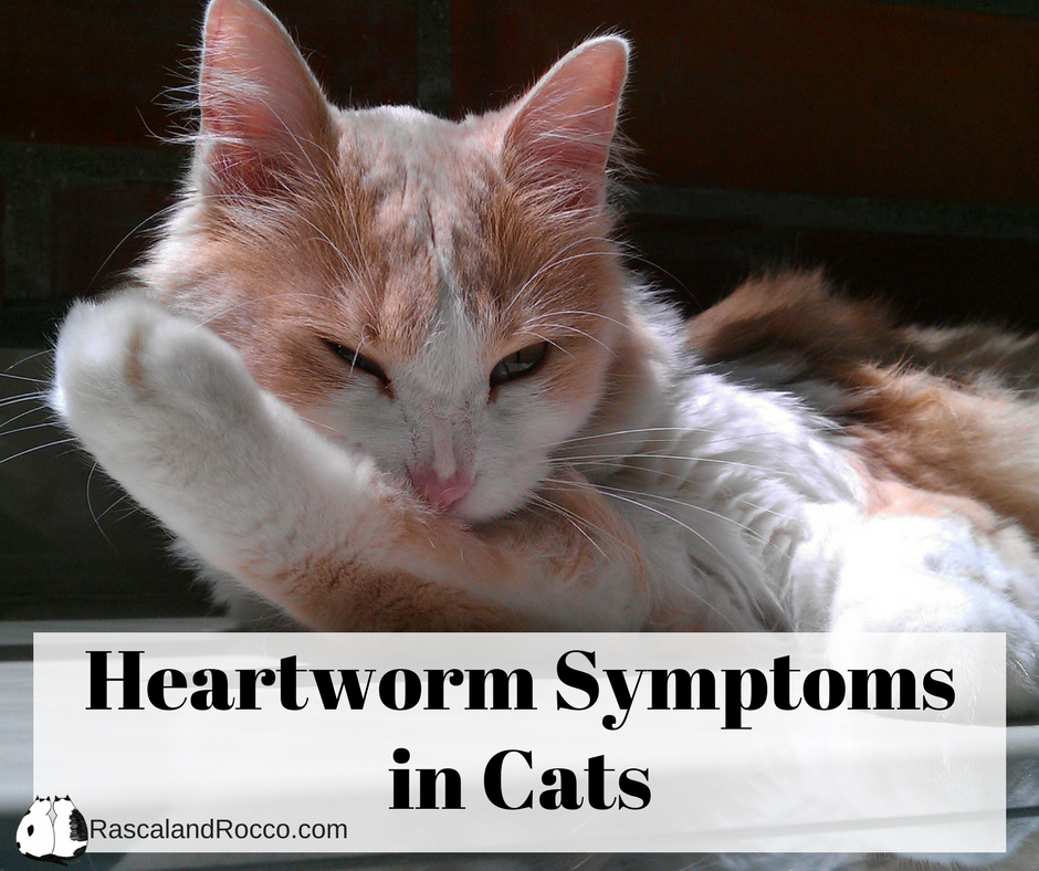 Symptoms Of Heartworms In Dogs And Cats