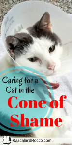 How to care for a cat in a cat cone or vet collar. Tips to take care of a cat in the cone of shame. | cat collar | sick cat | recovering cat | cats | kitty | pet care | pet health | cat health | healing a cat