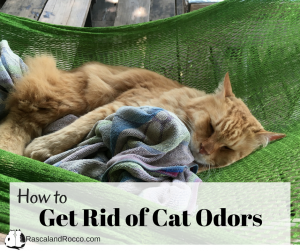Get rid of cat odor