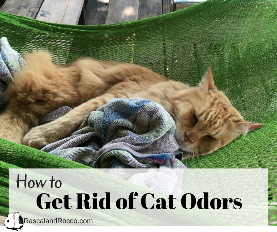 get rid of cat odor forever rascal and rocco