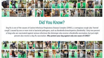 Dog Flu Recent Outbreaks! Does Your Dog Need Protecting?