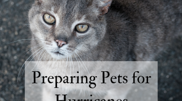 Preparing Pets for Hurricanes