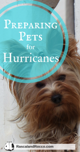 Preparing Pets for Hurricanes | cats | dogs | hurricane preparedness for pets emergency