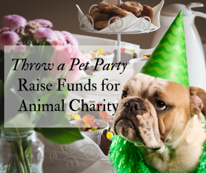 Valentines party for pets Raising funds for animal charity