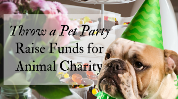 Raise Funds for Animal Charity – Throw a Party for Pets