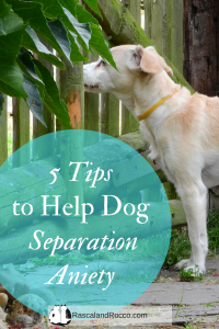 5 tips to help with dog separation anxiety | pet anxiety | pet health care | dog training tips | dogs new dog