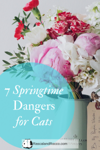 Springtime means exploring  cats but can also mean danger. 7 Springtime Dangers to be aware of for your cats. #cats #pets pets cat care cat behavior