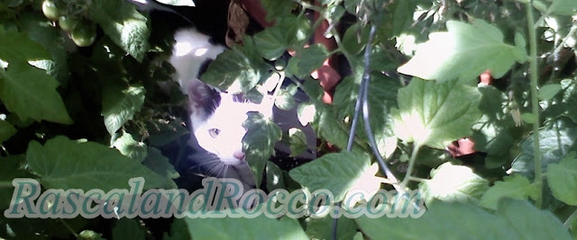 How to Create a Cat's Garden, Patio, or Outdoor Space- Part 2
