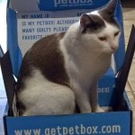 What's In a #Petbox? Review in photos
