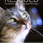 Last Day to Support Rescued's Campaign #MondayMatters