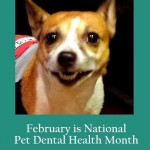 February is Pet Dental Health Month #MondayMatters