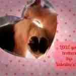 Unlikely Animal Love