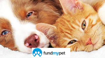 Easily Gain Funds for a Pet in Need #MondayMatters