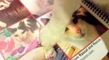 Cat Calendars and New Old Goals