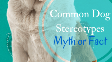 Common Dog Stereotypes Myth or Fact?