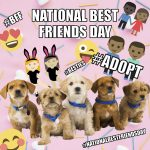 Pets Making Their Own Memes? Social Paws Aims to Get Pets Adopted