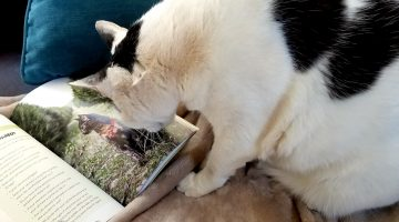 Love the New Adventure Cats Book Plus FREE Giveaway