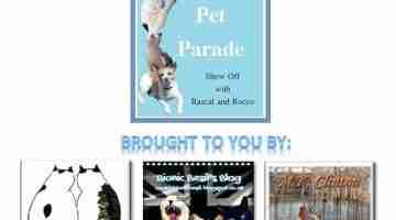Pet Parade 238