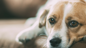 5 Tips to Help with Dog Separation Anxiety