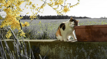 7 Springtime Dangers for Cats